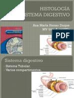 Clase Sistema Digestivo