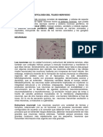 Documento Sistema Nervioso