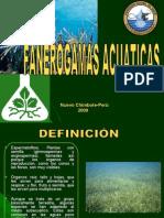 monocotiledoneas[1]