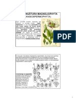 h Incr. Magnoliophyta Generalitati