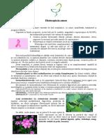 Fitoterapia in Cancer de Tiparit