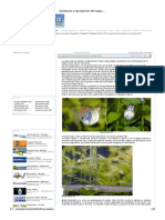 Acquario - Gestazione e Riproduzione Del Guppy