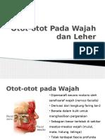 Otot-otot Pada Wajah Dan Leher