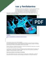 Endorfinas y Fenilalanina