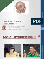 The Anatomy Facial Nerve