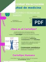 Cariotipo y Técnicas de Bandeo PRESENTACIÓN de GENÉTICA
