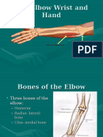 The Elbow Wrist and Hand