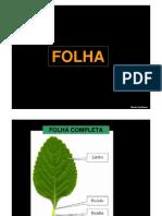 Biologia Botânica - Folha