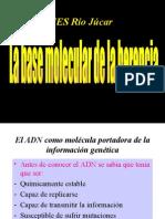 Tema 19 La Base Molecular de La Herencia