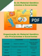 07organiza--o Do Material Gen-tico Nos Procariontes e Eucariontes