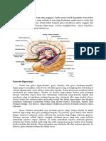 Tugas Sp Anat Neuro