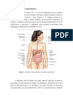 Anatomia Do Sistema Gastrintestinal