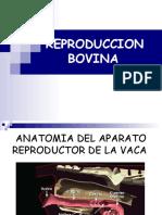 reproduccionbovina-120901113243-phpapp02