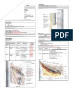 Gross Anatomy Inguinoscrotal Region