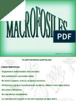 MACROFOSILES PARTE I.pps