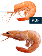 The Two Shrimps