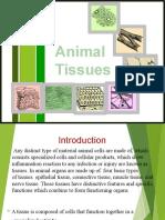 Animal Tissue