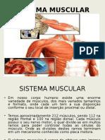 Slides Sistema Muscular
