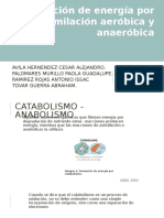 1.6 fermentacion-avila-palomares.ramirez,tovar.pptx