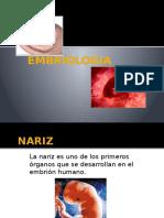 nariz, embriologia