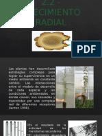 Crecimiento Radial