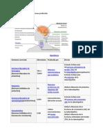 hormona 1.pdf