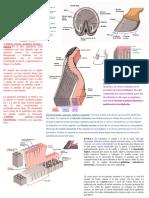 Anatomia - Casco