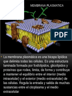 MEMBRANA PLASMATICA.pptx