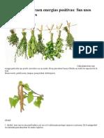 50 Plantas Que Atraen Energías Positivas