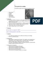 Práctica de Laboratorio 1.- Células de La Cebolla