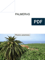 PALMERAS Fotos Especies