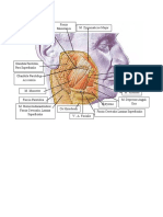 anatomi tulis seendirier