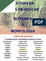 Cana, Botânica e Fenologia