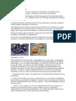 Patología en Moluscos Eliiiii