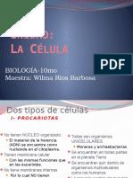La Celula 2007 Revisado