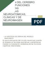 Relacion Del Cerebro Con Las Funciones Cognitivas