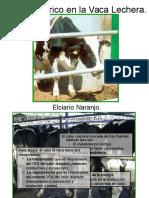 Estrés Calórico en La Vaca Lechera