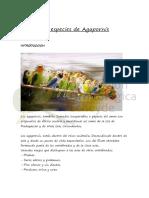 agapornis.pdf