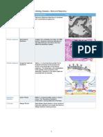 Histo Disease NBS Final