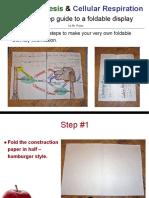 copy of photosynthesis   cellular respiration foldable presentation