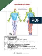 Dermatome Myotome