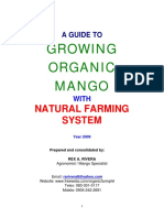 Growing Organic Mango