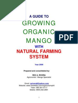 Growing Organic Mango | Organic Farming | Trees