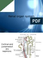 Renal Organ System