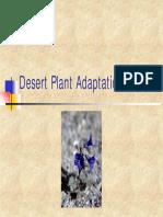 Arity Desert Plants