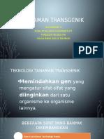 tanaman Transgenik