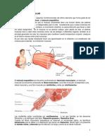 4.8 Contracción muscular.pdf