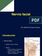 Nervio Facial (1)