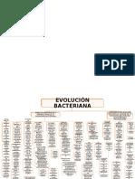 Evolucion bacteriana