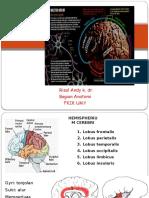 Cortex Cerebri Dan Meninges ,Risal Snc 1